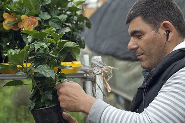 Produzione e vendita piante ornamentali stampa su tela for Vendita piante ornamentali